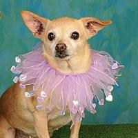 Adopt A Pet :: Sami - mishawaka, IN