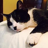 Adopt A Pet :: Cookie - Glendale, AZ