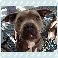 Adopt A Pet :: Willow - West Los Angeles, CA