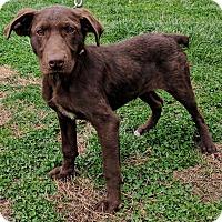Adopt A Pet :: Cinderella - Waldorf, MD