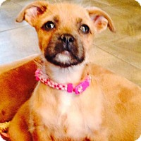 Adopt A Pet :: Juliet - Christiana, TN