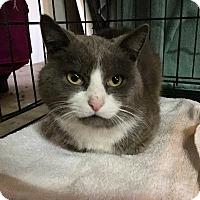 Adopt A Pet :: Frank - Plainville, CT