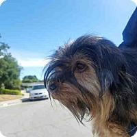 Adopt A Pet :: ZOE - Santa Maria, CA