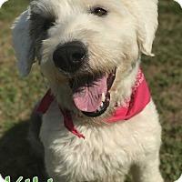 Adopt A Pet :: Kiki - E. Greenwhich, RI