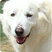 Adopt A Pet :: Angel #2 -Adopted - Oklahoma City, OK