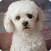 Adopt A Pet :: Hugo - Milan, NY