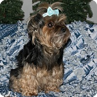 Adopt A Pet :: Nikki - Statewide and National, TX