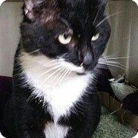 Adopt A Pet :: Zorro - Bedford, IN