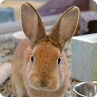 Adopt A Pet :: Oolong - Fairport, NY