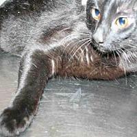 Adopt A Pet :: MAX - Aurora, IL