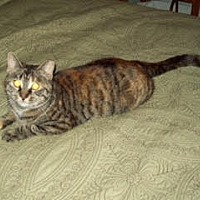 Adopt A Pet :: Punkin (courtesy posting) - Harrisburg, PA