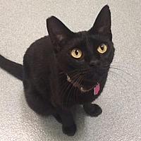 Adopt A Pet :: Helga - Cumberland, ME