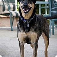 Adopt A Pet :: Misty - Norwalk, CA