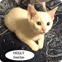 Adopt A Pet :: Holly - Crane Hill, AL