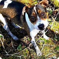 Adopt A Pet :: Sasha (In Foster) - Freeport, ME