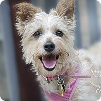 Adopt A Pet :: CeCe-Pending Adoption - Omaha, NE