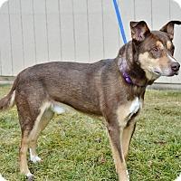 Adopt A Pet :: Brownie - Meridian, ID