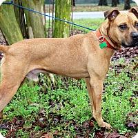 Adopt A Pet :: Wrinkles - Starkville, MS