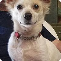 Adopt A Pet :: Larry - Ormond Beach, FL