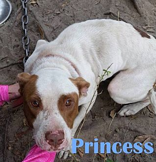 Staffordshire Bull Terrier Mix Dog for adoption in Orangeburg, South Carolina - Princess