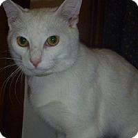 Adopt A Pet :: Remy - Hamburg, NY