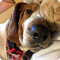 Adopt A Pet :: PENNY LANE - Pennsville, NJ