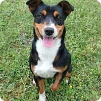 Adopt A Pet :: Princess - Tyler, TX