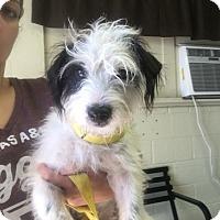 Adopt A Pet :: Moe Didley - Norwalk, CT