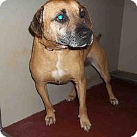 Adopt A Pet :: Roxy - Newnan City, GA