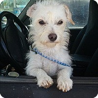 Adopt A Pet :: Chloe - Crawfordville, FL