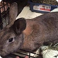 Adopt A Pet :: Shila - Woburn, MA