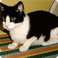 Adopt A Pet :: Onyx - Medway, MA