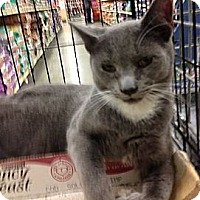 Adopt A Pet :: Ziggy - Pittstown, NJ