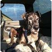 Adopt A Pet :: Scooby - Inver Grove Heights, MN