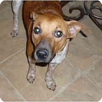 Adopt A Pet :: Daisy - Pointblank, TX