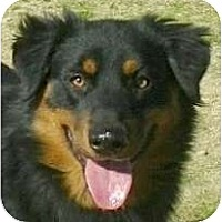 Adopt A Pet :: Tobias - Kingwood, TX