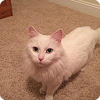 Adopt A Pet :: Lady Anntebellum - Harrisburg, NC