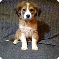 Adopt A Pet :: Whiskey - Toledo, OH