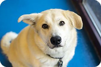 Shepherd (Unknown Type)/Labrador Retriever Mix Dog for adoption in Silver Spring, Maryland - Roxy