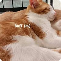 Adopt A Pet :: Buff - West Orange, NJ