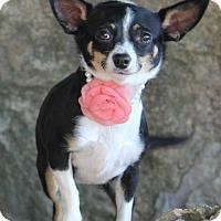 Adopt A Pet :: Tiki - Dalton, GA