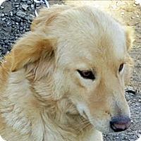 Adopt A Pet :: T4 Blossom - BIRMINGHAM, AL