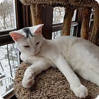 Adopt A Pet :: Johnny Winter & Jewel (Bonded) - Verona, WI