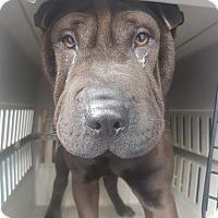 Adopt A Pet :: Ming - Brunswick, ME