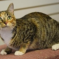 Adopt A Pet :: Annabelle - DFW Metroplex, TX