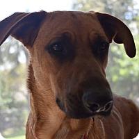 Adopt A Pet :: Texane beauty!! - Ft Myers Beach, FL