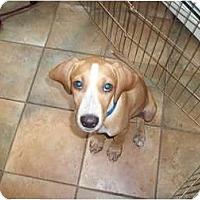 Adopt A Pet :: Ivan - In Monroe, CT! - Adamsville, TN