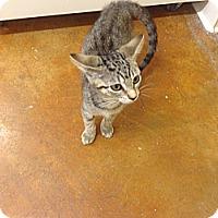 Adopt A Pet :: Bumblebee - Lake Charles, LA