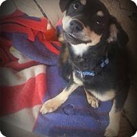 Adopt A Pet :: Mighty Mite - Alamogordo, NM