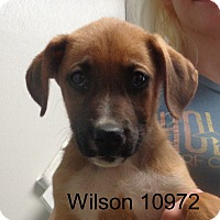 Adopt A Pet :: Wilson - Greencastle, NC